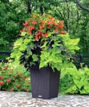 Container gardens that even you can't kill!