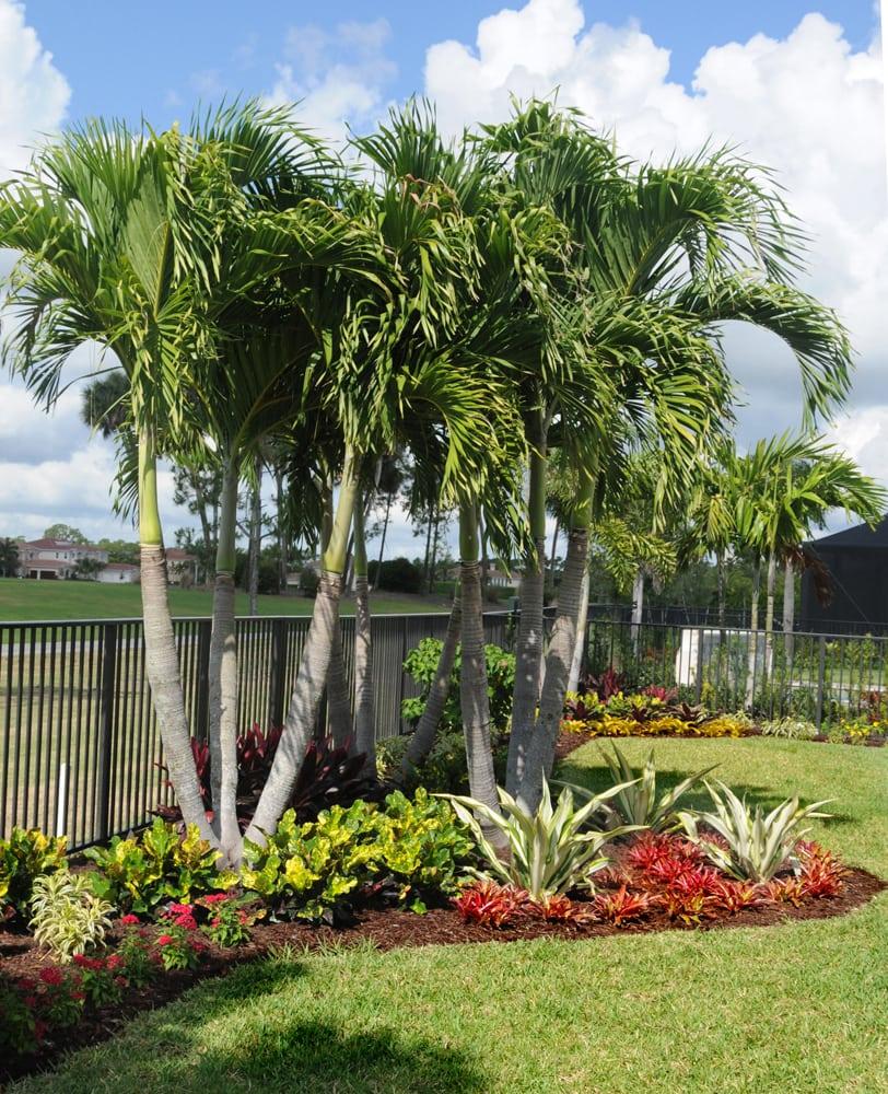 Palm Tree Landscape Ideas Front Yards