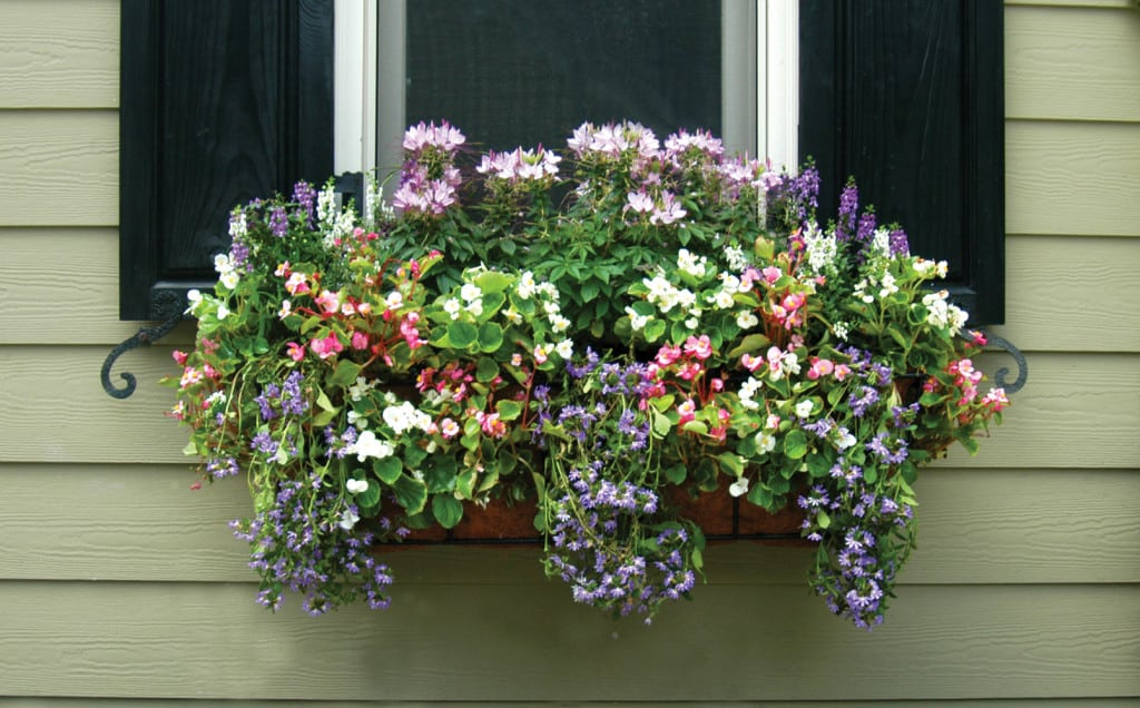 Palm-Beach-window-boxes-9