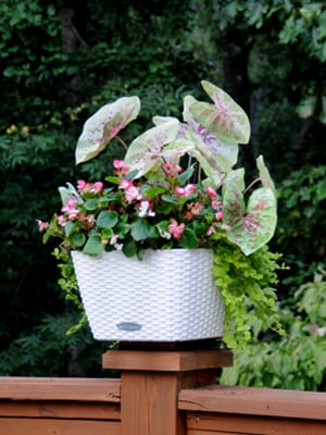 Click here for video design tips for small planters (2:06).