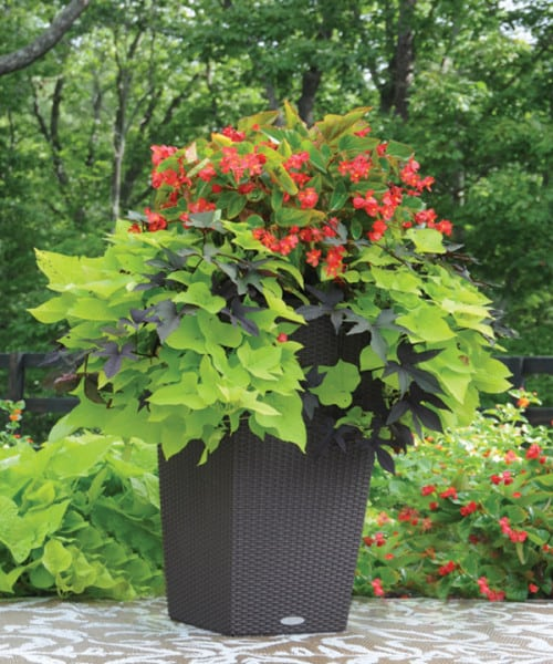Click here to see a video about container gardens that even you can't kill (3:52)!