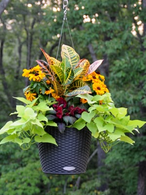 Click here for video design tips for small hanging baskets (2:51).