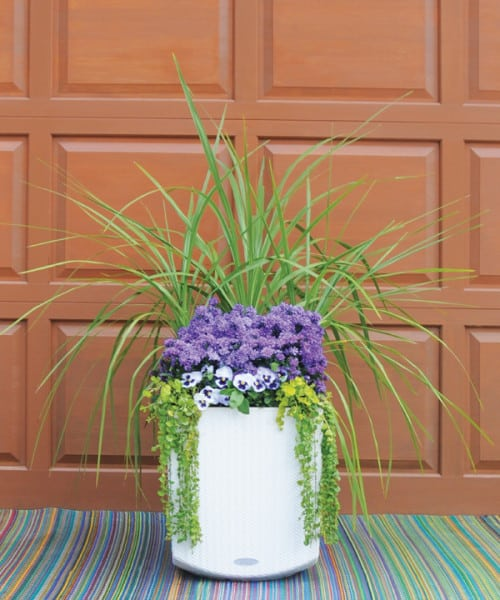 Click here to see video tips for simple container garden design (3:09).