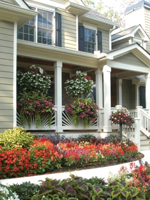 Click here to see a video showing hanging baskets and window boxes in Pamela's garden.