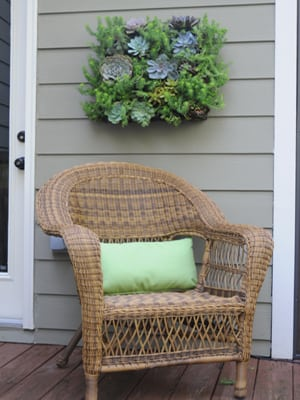 Click here to buy Living Wall Planters.