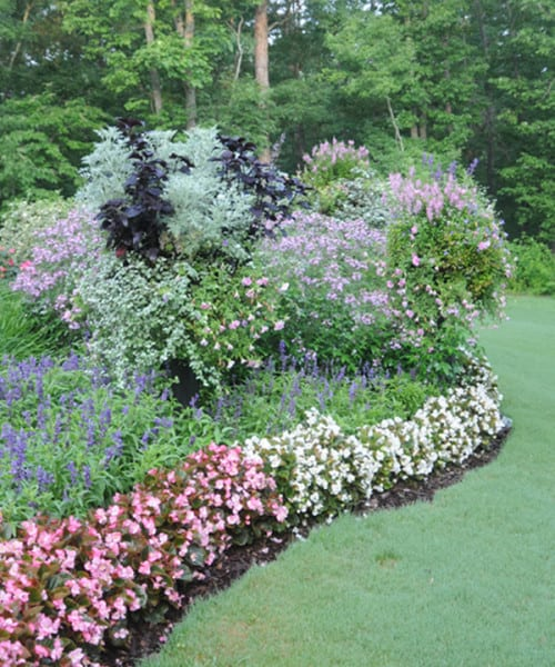 Click here to see a video of Pamela's silver container garden (1:27).
