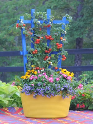 Click here to buy colorful 'Trug & Trellis' vegetable planters.