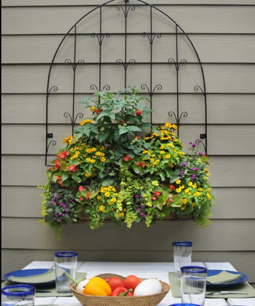 Click here to buy wall trellises-window box combos.