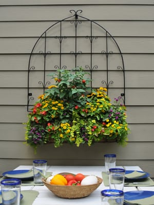 Click here to buy planter-trellis combination.