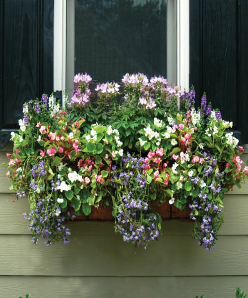 These boxes ae planted in the sides as well as the top. The result looks like a fabulous flower box.