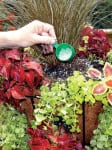 How to Trim and Fertilize Container Gardens