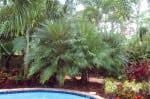 Roebellini by pool