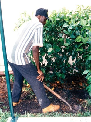 How to Remove a Shrub in the Palm Beach Landscape