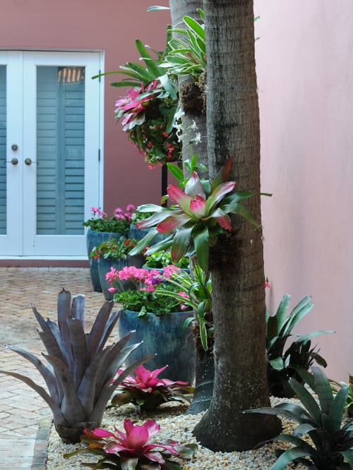 Bromeliads on trees