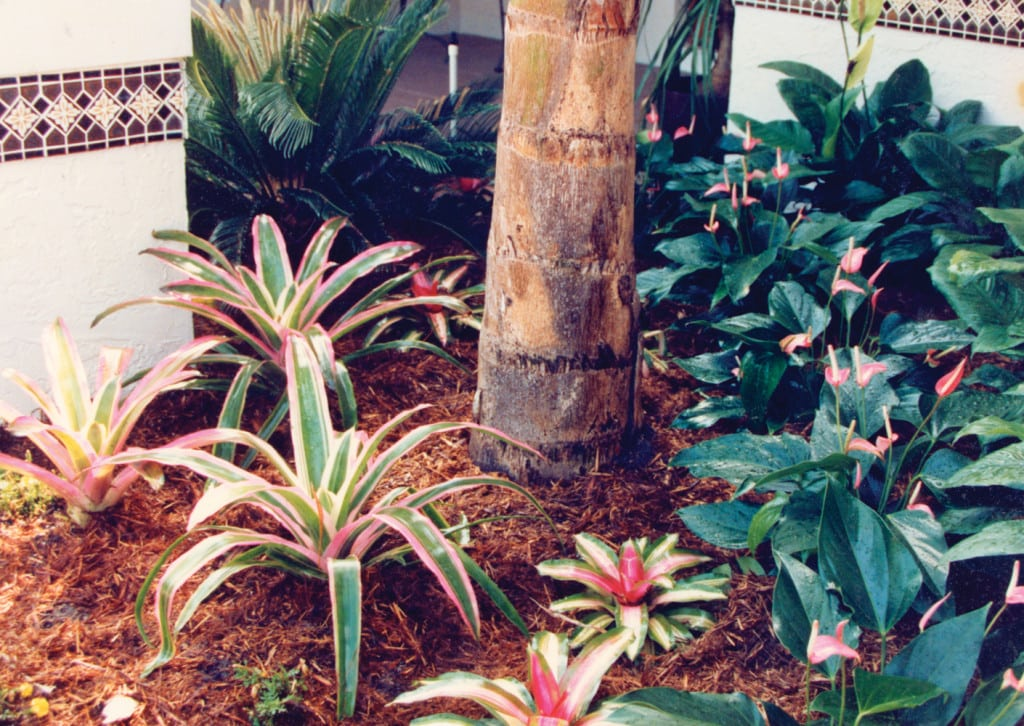 landscaping-palm-beach-gardens-6-pamela-crawford