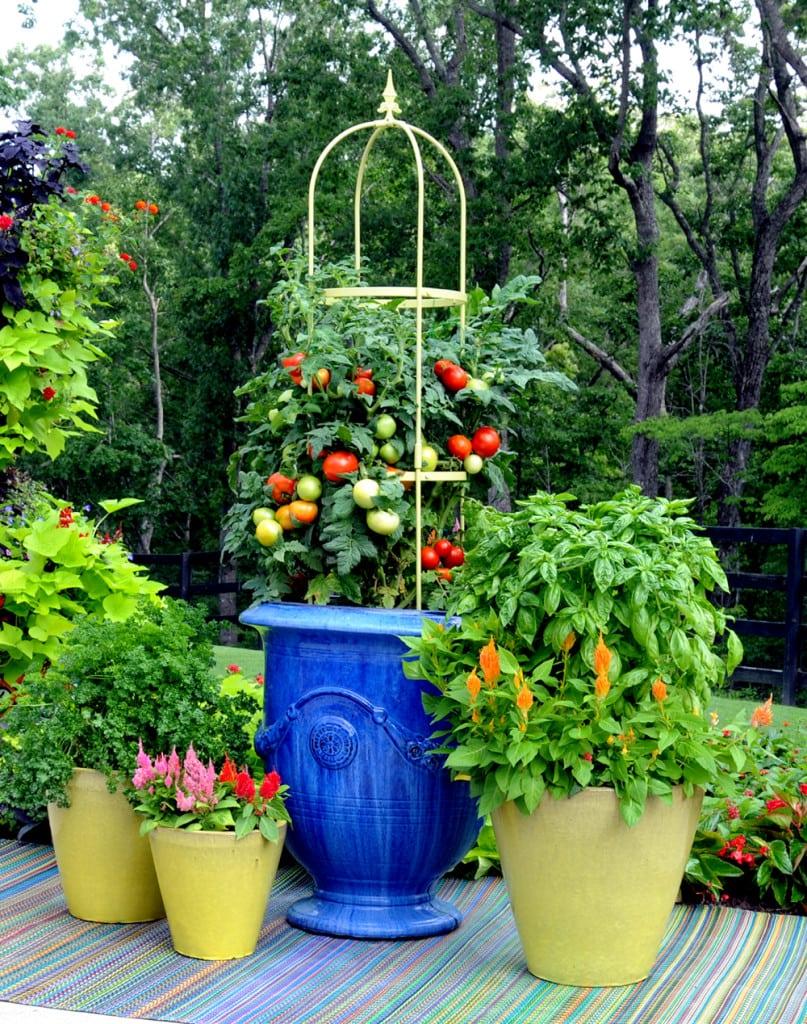 Tomatoes-2-pamela-crawford